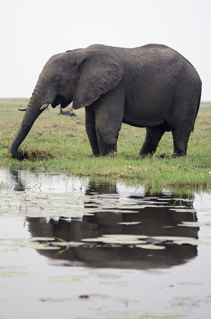 Reflection of Elephant